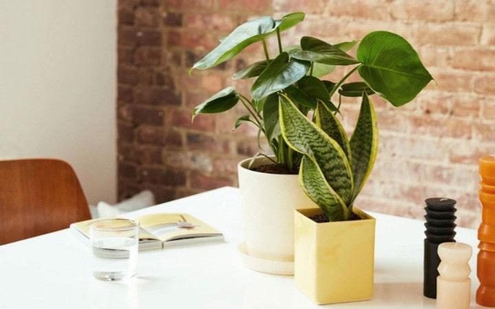 استفاده از گیاهان در چیدمان آشپزخانه